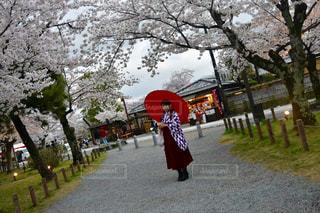 春,桜,京都,観光,着物,嵐山,ハイカラさん