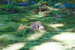 背景の木と草のフィールド - No.906757