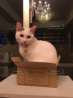 ボックスに座って猫の写真・画像素材[1291355]