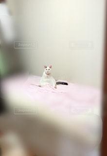 テーブルの上に座って猫の写真・画像素材[1291357]