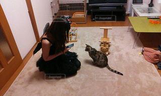床に横になっている猫の写真・画像素材[1291536]
