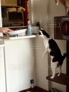 冷蔵庫の上に座っている猫の写真・画像素材[1291542]