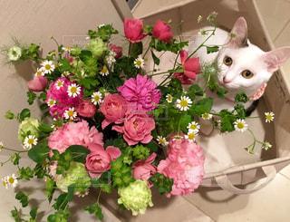 ピンクの花の花束の写真・画像素材[1291560]