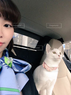 襟付きのシャツを着て猫の写真・画像素材[1291562]