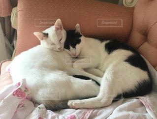 ベッドの上で眠っている猫の写真・画像素材[1291563]
