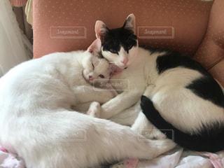 ベッドの上で横になっている白黒猫の写真・画像素材[1291564]