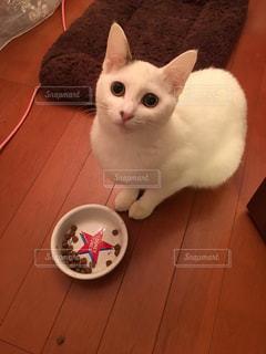 木製の床の上に座っている猫の写真・画像素材[1291566]