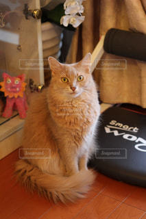 テーブルの上に座って猫の写真・画像素材[1291604]