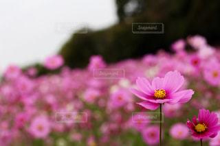 近くの花のアップの写真・画像素材[1454472]