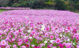 植物にピンクの花の写真・画像素材[1454477]