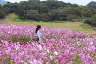 フィールドに紫の花の写真・画像素材[1454498]