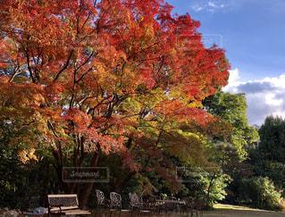 木の前にあるベンチの写真・画像素材[1642793]