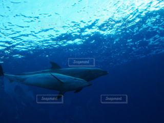 イルカの写真・画像素材[692241]