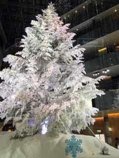 冬,クリスマス,ツリー,クリスマスツリー,KITTE