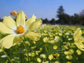 近くの花のアップの写真・画像素材[1512718]