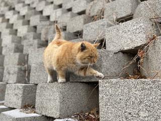 猫,動物,日常,ペット,人物,可愛い,コンクリート,中国,cat,一眼,万里の長城,ネコ