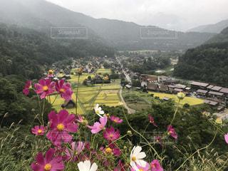 フィールドの背景の山と花の写真・画像素材[770163]