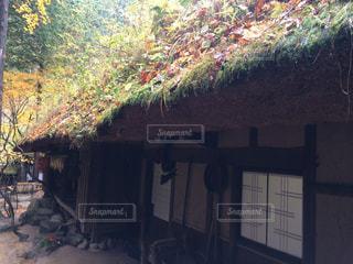 秋の景色の写真・画像素材[882605]