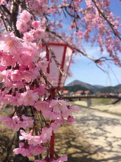 植物にピンクの花の写真・画像素材[1370761]