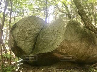大きな岩の前に木の写真・画像素材[1142684]