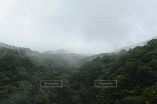 緑,霧,朝靄,栃木,奥日光