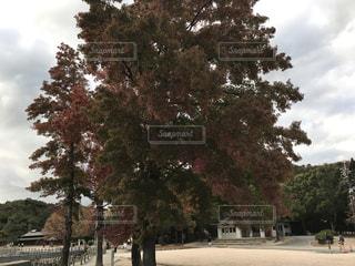 駐車場の木の写真・画像素材[876462]