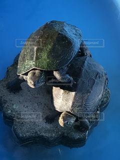 水の下で泳ぐ海亀の写真・画像素材[722536]