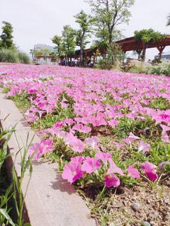 神戸どうぶつ王国の写真・画像素材[701547]