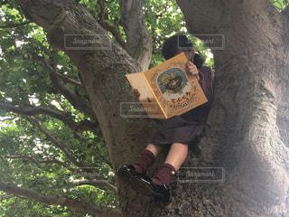 木の上で読書🍂📚の写真・画像素材[745367]