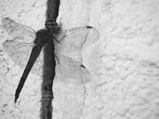 枝の昆虫の写真・画像素材[816293]