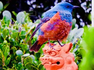 カラフルな鳥 - No.908202