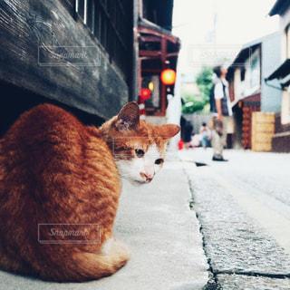 歩道の上に座ってオレンジと白猫の写真・画像素材[1234003]