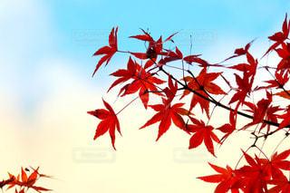空,秋,紅葉,赤,紅,奈良,奈良公園,秋空