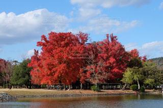 水の体の前に木の写真・画像素材[1611586]
