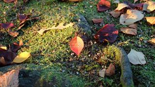 芝生で横になっている人々 のグループの写真・画像素材[1612643]