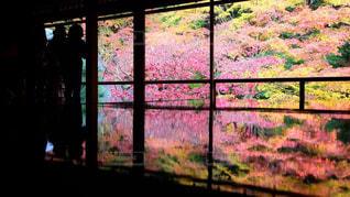 秋の瑠璃光院の写真・画像素材[1632998]