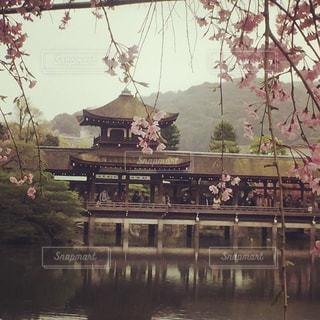 春の平安神宮の写真・画像素材[1665794]