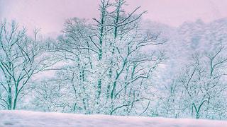雪の森の写真・画像素材[1733821]