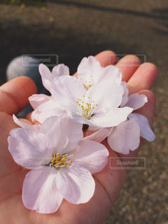花を持っている手の写真・画像素材[1886194]
