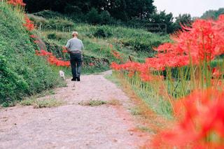 曼珠沙華が咲く道の写真・画像素材[2141038]