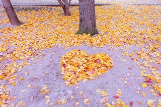 公園,秋,紅葉,黄色,樹木,ハート,イチョウ,銀杏,いちょう