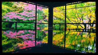 秋の瑠璃光院の写真・画像素材[2513230]