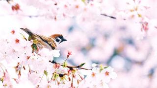 花に止まっている鳥のクローズアップの写真・画像素材[4271443]
