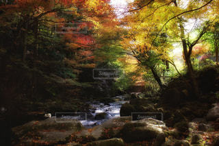 森の中の大きな滝の写真・画像素材[863608]
