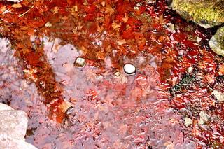 楓の天の川 - No.756908