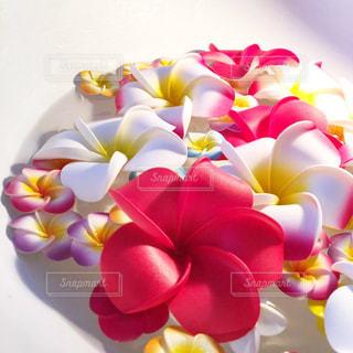 花,水,涼しげ,プルメリア,洗面台