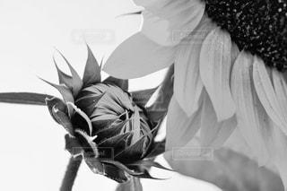 近くの花のアップの写真・画像素材[821177]