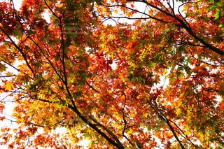 近くの木のアップ - No.840515