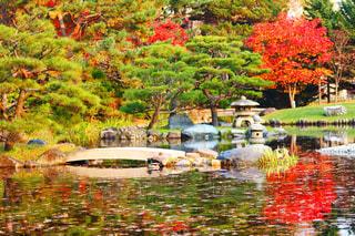 池の色とりどりの花のグループの写真・画像素材[846901]