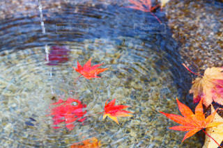 紅葉と水の写真・画像素材[846903]